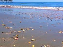 She Sells Sea Shells By The Sea Shore Ocean Isle Inn Blog