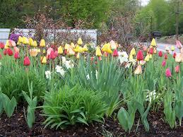 Small Picture Best 20 Bulb Garden Bed Design Flower Garden Design Ideas