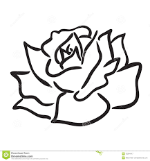 Rosa Illustrazione Vettoriale Illustrazione Di Fiore 15264417