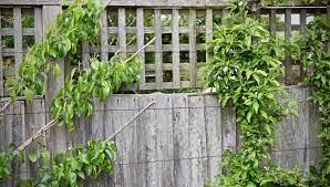 how to make trellis panels herbidacious