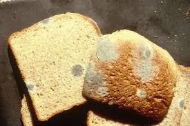 Never Eat The Clean Part Of Moldy Bread Sfgate