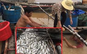 Cá chết trắng trên sông La Ngà (Đồng Nai): Người dân được hỗ trợ 12,3 tỷ đồng