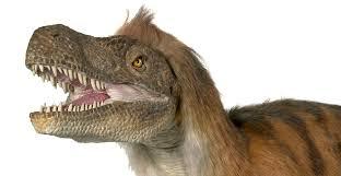Velociraptor Size Chart Vicious Velociraptor Tales Of A Turkey Sized Dinosaur