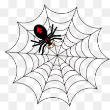 web drawing southern black widow redback spider drawing clip art spider png