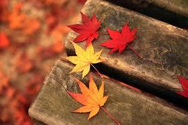 秋之相思,8首描寫楓葉的詩詞:停車坐愛楓林晚,霜葉紅於二月花- 每日頭條