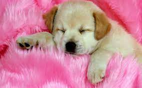 Puppies Wallpapers Free Download Group ...