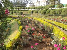 garden com. Modren Garden Rose Garden Ooty With Garden Com