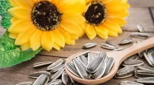 Resultado de imagem para semente de girassol