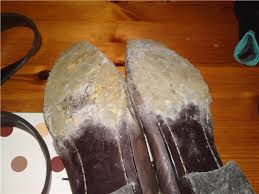 leather which is dead animal skin is a great food for mold put a contaminated purse or shoes next to your other shoes purses or golf