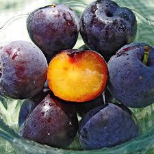 FRUIT TREE Plum Prunus Sp  Rosaceae Rose Family  Purple Plum Fruit Tree Varieties