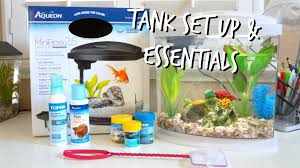 Labyrinth Fish Tank How To Set Up A Betta Fish Tank Essentials Youtube