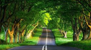 beautiful nature wallpaper download. Delighful Download Download Beautiful Nature Wallpaper Big Size Gallery Inside 8