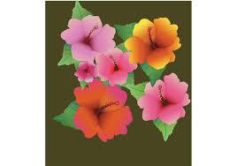 hibiscus flowers flower vector free hibiscus flowers
