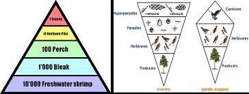 food web pyramid ecological succession food chain food web ecological pyramids