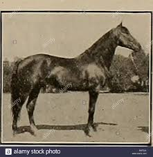 Breeder and sportsman. Horses. CARLOKIN 2:07! A.T. R.No. 36548 Exhibition  Mile 2:05 Sire of Cnrsto (2) 2:; 2:17), Santiago /i (trial 2:30, etc. dam,  Carlotta Wilkes (dam Mary Dillon 2:06%, Carlokin