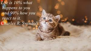 Cat Quotes Simple Charles R Swindoll Quote YouTube