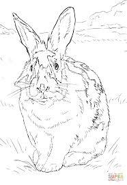 Disegno Di Coniglio Bianco E Nero Da Colorare Disegni Da Colorare