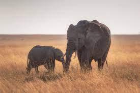 Mother Baby Elephant 4k, HD Animals, 4k ...