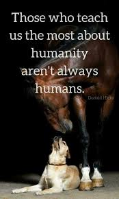 Indeed Animals Are On Such A Way Higher Level Than Most Humans Gorgeous Love Animal Quotes