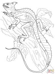 Green Basilisk Coloring Page The Plumed