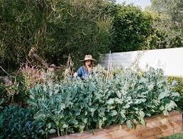 Gardens Edible Gardens La