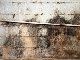 hgrm moldy basement wall s4x3 a moldy basement wall