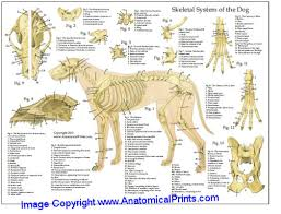 dog chart