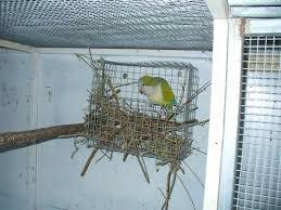 quaker parrot nest box