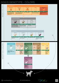 Dog Dna Chart Dogs Genotype And Colors Mydogdna