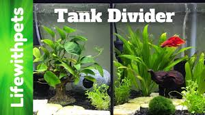 full size of fish tank divider stupendous photo inspirations how to install our betta now available