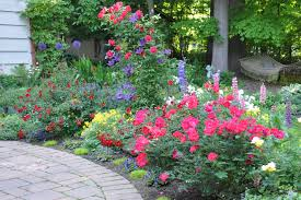 Small Picture Color in Danielas garden in Ohio Fine Gardening