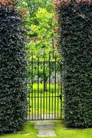 old garden gate beautiful old garden gate with hedges stock image image of outdoor plant old garden gate