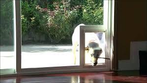 door with cat door built in screen door insert patio pacific flap panel cat door dog door with cat door built in exterior door with pet