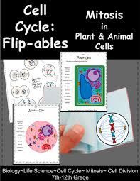 cell cycle flip book cell division mitosis flip book