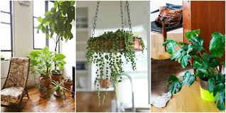best indoor plants good inside plants for small space gardening intended for house with indoor plants indoor plants to make your house fresher