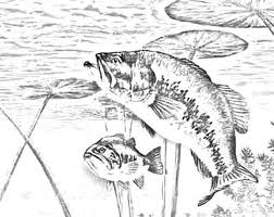 Small Picture Coloring Pages Bass Fish mosatt