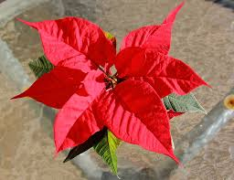 Mein Wunsch Der Weihnachtsstern Soll Allen Menschen