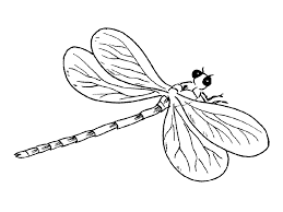 A Young Dragonfly Coloring Pages