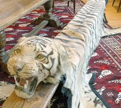benghal tiger skin rug with a