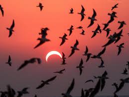 solar eclipse on June 10 2021 ...