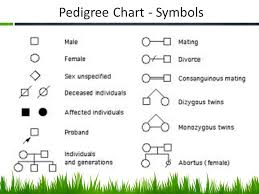 Mrs Stewart Honors Biology Pedigree Charts Ppt Video