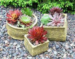 order plants online. Succulent Plants Online Best Ideas About Succulents On Order Cactus Buy Christmas Canada