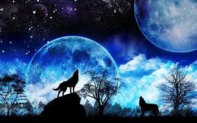 wolf howling wallpaper desktop. Wolves Images HD Wallpaper And Background Photos Throughout Wolf Howling Desktop