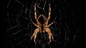Spider Facts And Information For Children Spiders For Kids