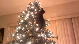 Katzen Sind Verrückt Nach Weihnachtsbäumen