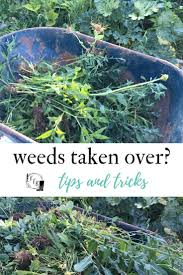 get rid of weeds in the garden when they ve taken over