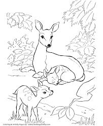 Small Picture Deer Coloring page Doe and Fawn coloring page deer Pinterest