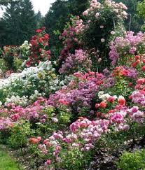 Small Picture 15 best How do your roses grow images on Pinterest Gardening