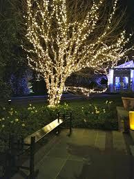 outdoor tree lighting ideas. Outdoor Lights For Trees In Home Designs Lanterns  Outdoor Tree Lighting Ideas