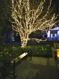 outdoor lights for trees lights trees in home designs outdoor lanterns for trees